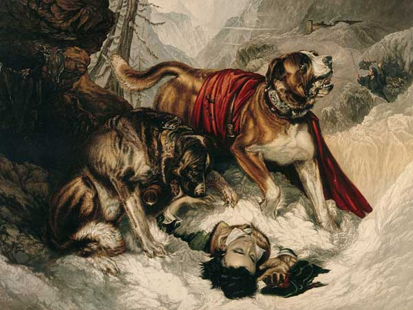 Edwin Landseer's painting .  Note the barrel around the first dog's neck.  this is where the legend of the St. Bernard's barrel is thought to come from.