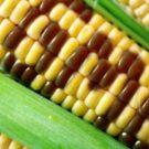 A GMO Argument